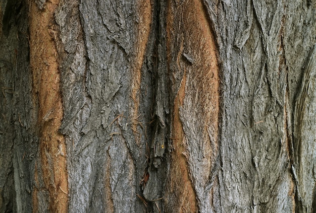 Textura de casca de árvore áspera marrom-escura para