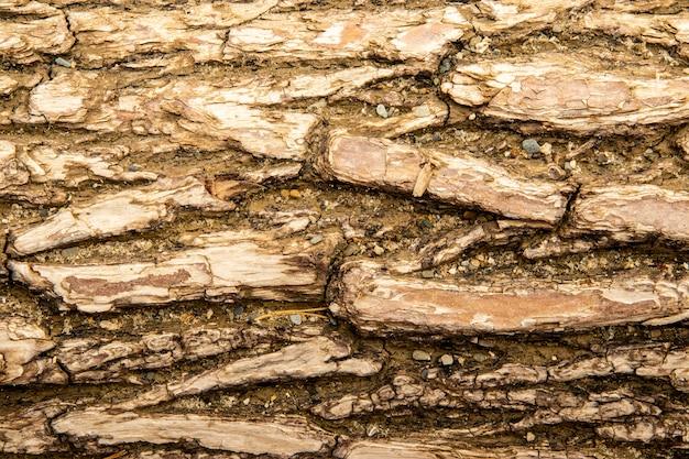Textura de casca de árvore, casca de pinheiro