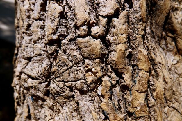 Textura de casca de árvore close-up como um fundo de madeira