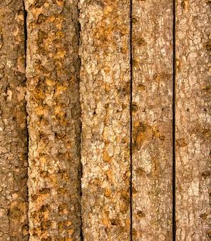 Textura de casca de árvore crua.