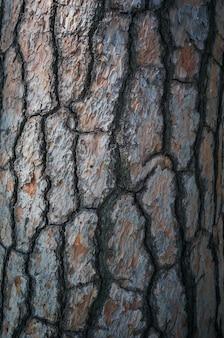 Textura de casca de árvore de alta qualidade