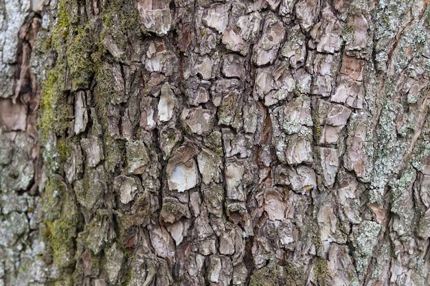 Textura de casca de árvore. fundo de madeira