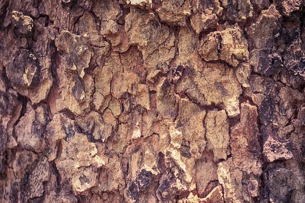 Textura de casca de árvore marrom para o fundo