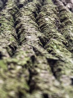 Textura de casca de árvore. o musgo cobriu o fundo de madeira velho da textura. textura da casca de árvore com plantas verdes.