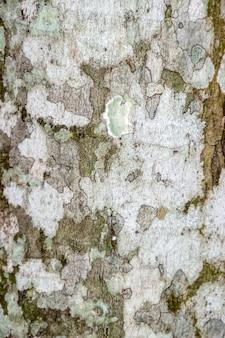 Textura de casca de árvore para plano de fundo