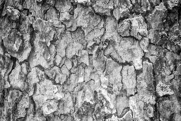 Textura de casca de árvore preto e branco para o fundo