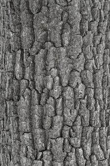 Textura de casca de árvore seca
