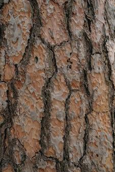 Textura de casca de árvore sem emenda. fundo de madeira sem fim para preenchimento de página da web ou design gráfico. carvalho ou bordo