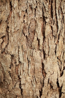 Textura de casca de árvore. textura de madeira velha do grunge para plano de fundo com tons de cor.