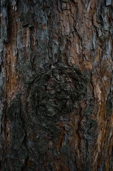 Textura de casca de árvore. tronco de pinheiro close-up.