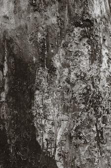 Textura de casca de árvore.