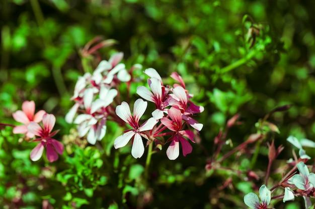 Textura de close-up de flores