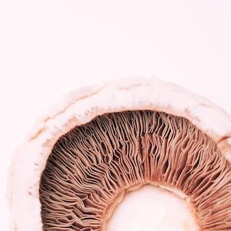 Textura de cogumelo macro