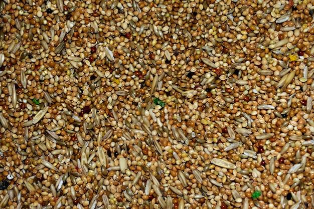 Textura de comida de periquito