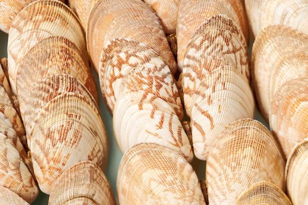 Textura de conchas naturais