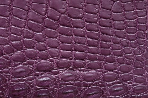 Textura de couro de crocodilo roxo.