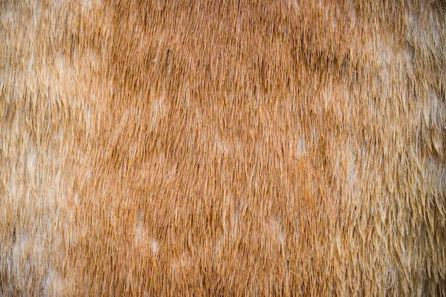 Textura de crina e fundo close-up