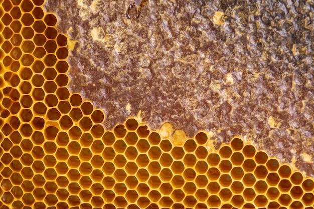 Textura de favo de mel amarela