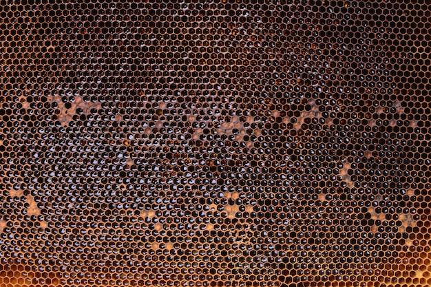 Textura de favos de mel de abelha
