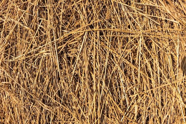 Textura de feno. os fardos de feno são empilhados em grandes pilhas. colheita na agricultura.