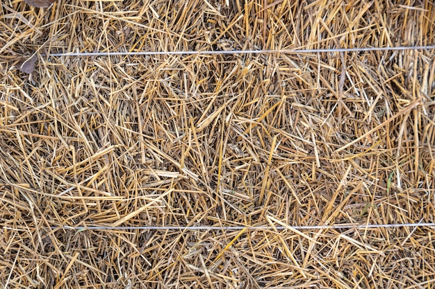 Textura de feno. vista frontal de um fardo de feno como uma fazenda agrícola e um símbolo agrícola da época da colheita com palha de grama seca como um palheiro de malha amarrado. feriado de shavuot, colheita, fundo de feno.