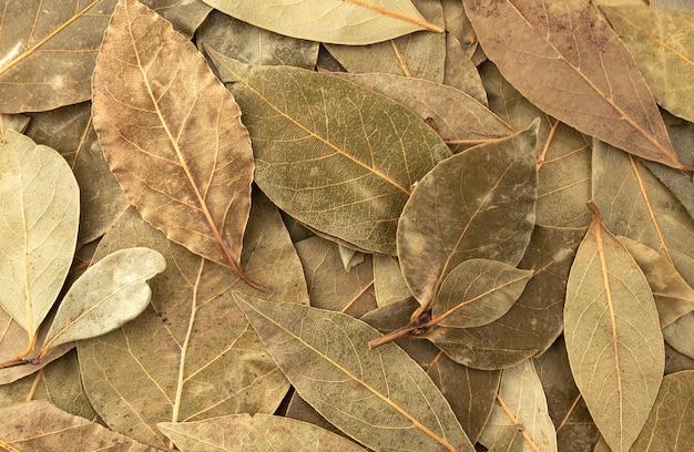 Textura de folha de louro seca close-up, vista superior