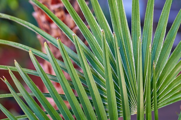 Textura de folha de palmeira tropical verde
