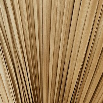 Textura de folha de palmeira