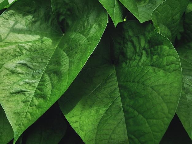 Textura de folha de planta verde fresco de close-up no jardim