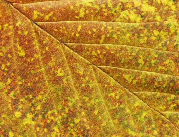 Textura de folha outonal abstrata colorida