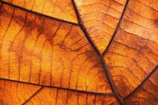 Textura de folha seca e fundo de natureza