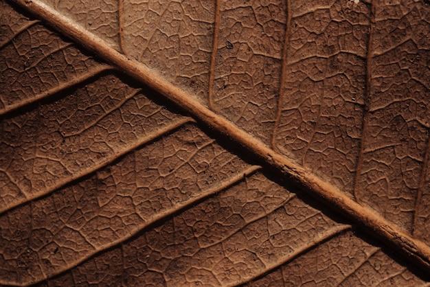Textura de folha seca