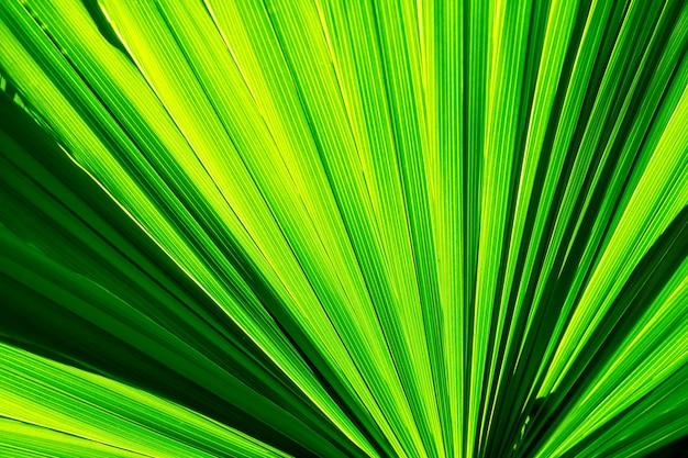 Textura de folha verde de palmeira, com sombras, folha tropical, plano de fundo da natureza, close-up