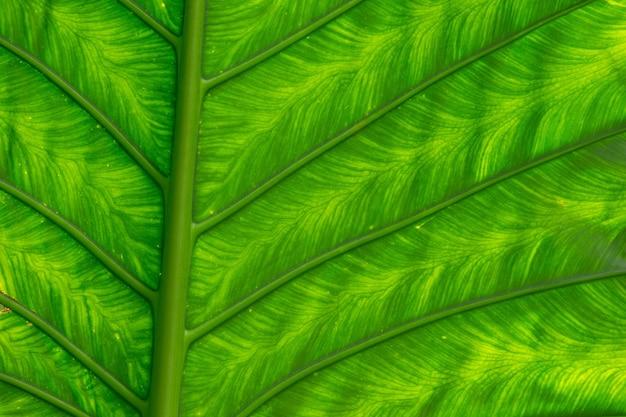 Textura de folha verde de uma planta de perto