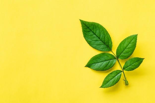 Textura de folha verde. folha textura