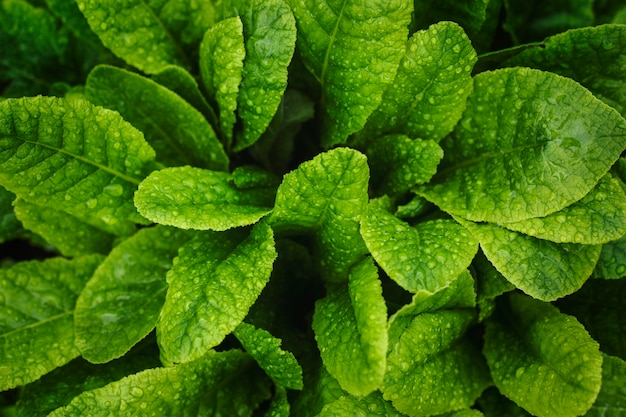 Textura de folha verde. fundo de textura de folha.