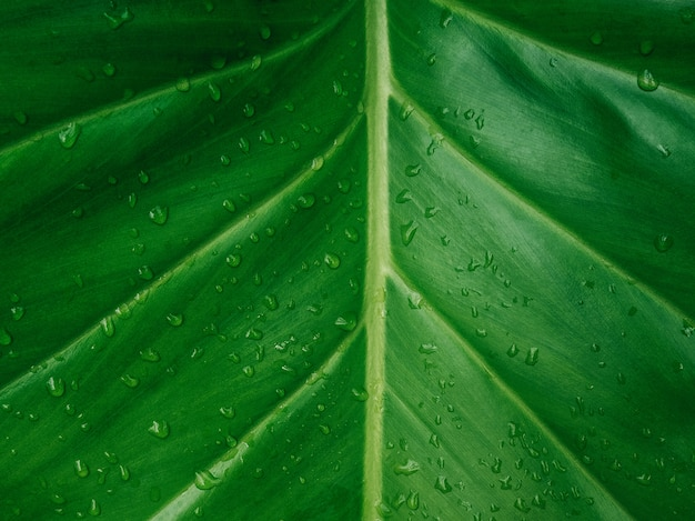 Textura de folha verde / fundo de textura de folha