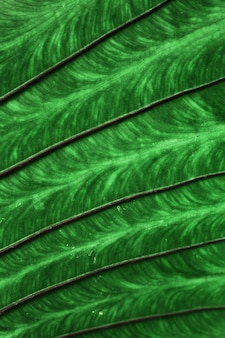 Textura de folha verde tropical