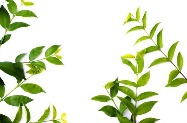 Textura de folha verde. vista superior do fundo da textura da folha