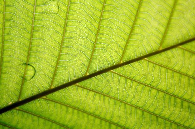 Textura de folha vermelha - closeup