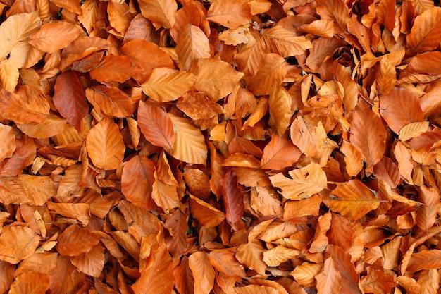 Textura de folhas amarelas de outono