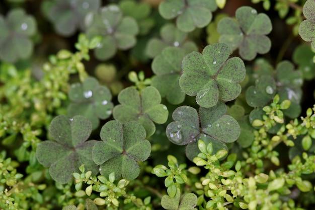 Textura de folhas close-up