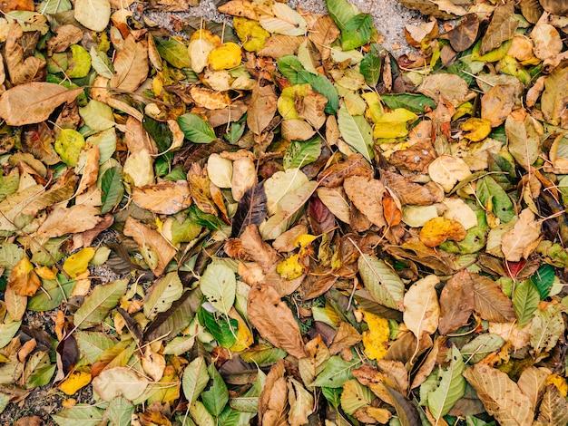 Textura de folhas de outono folhas amarelas caídas no chão