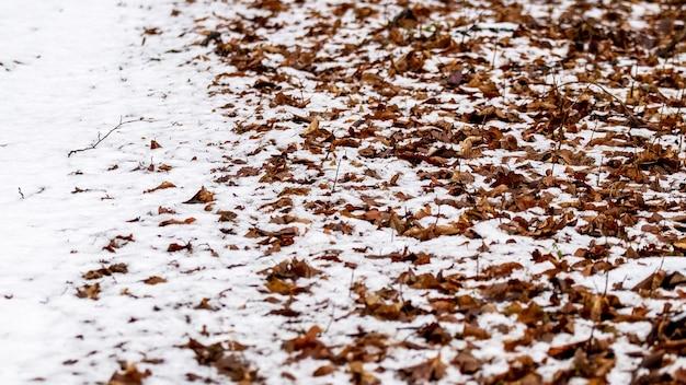 Textura de folhas secas de outono cobertas de neve no chão