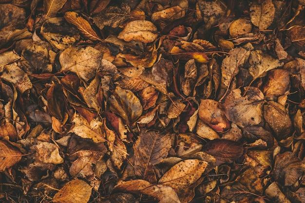 Textura de folhas secas no chão de perto