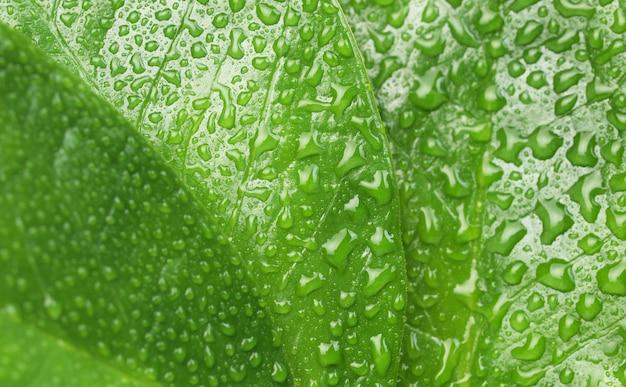 Textura de folhas verdes com gotas de água