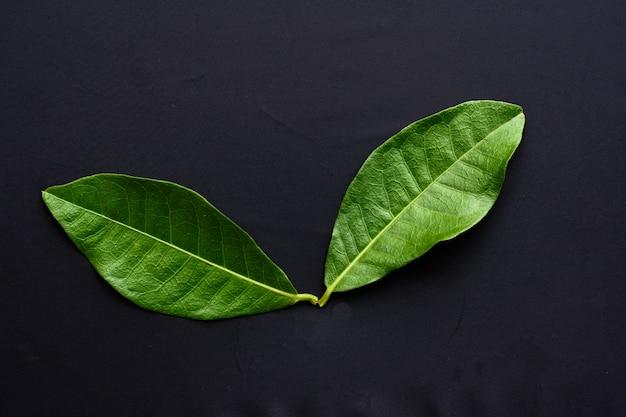 Textura de folhas verdes tropicais em preto