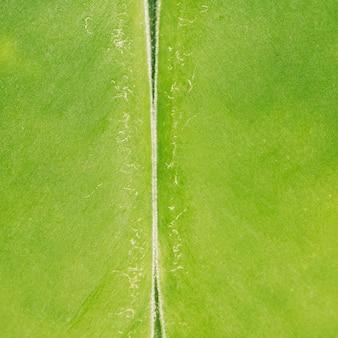 Textura de frutas tropicais de macro