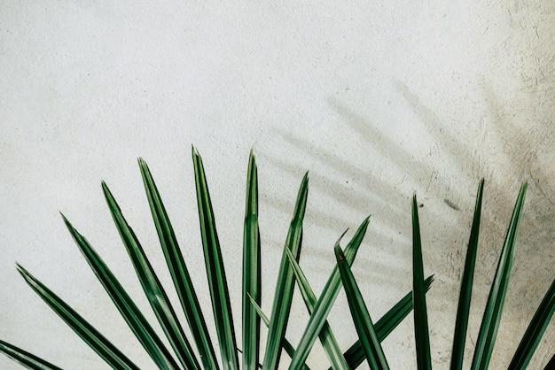 Textura de fundo abstrato de folhas de palmeira de sombras em uma parede de concreto