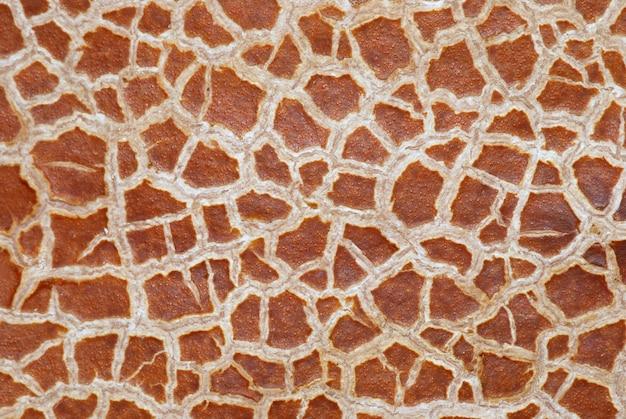 Textura de fundo casca rachada